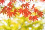紅葉を見に千葉へ 電車で行けるおすすめスポット 時期はいつ?