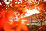 旅行へ行こう 関東で紅葉と温泉を楽しむ 10月と11月のおすすめ