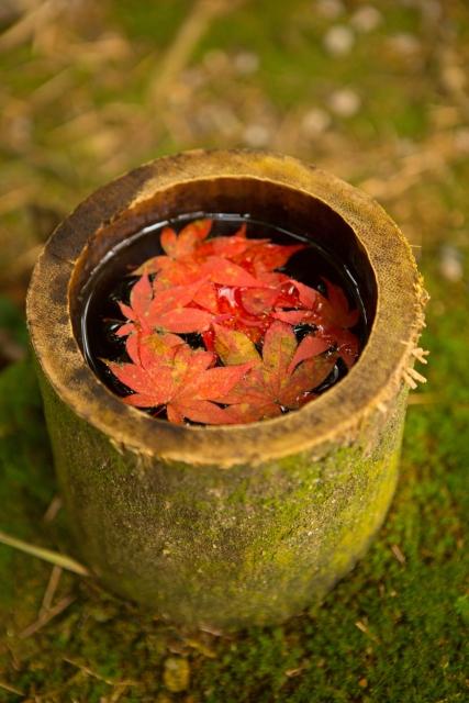 京都旅行 紅葉の時期におすすめのプランの立て方と秋の服装