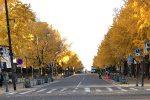 みなとみらいから歩ける銀杏並木の見頃は?横浜山下公園と日本大通り