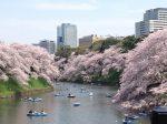 桜の時期の東京観光スポット 夜桜もおすすめ