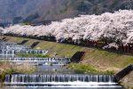 箱根の桜の時期はいつ?春の服装と桜を楽しめる宿