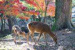 奈良興福寺の五重塔が見える宿 奈良公園近くの奈良観光におすすめの宿