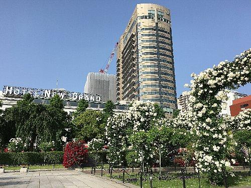 横浜山下公園のバラ