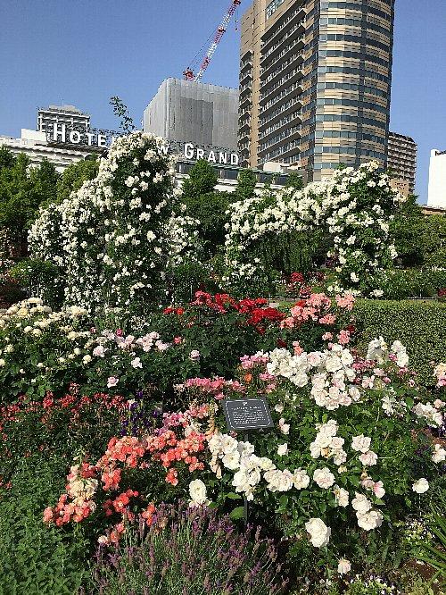 山下公園のバラとホテルニューグランド
